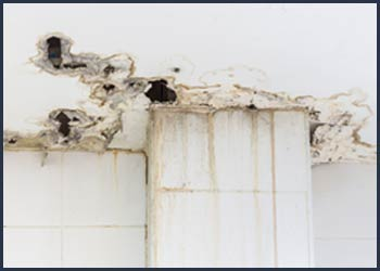 West Palm Beach Emergency Restoration West Palm Beach, FL 561-408-9703